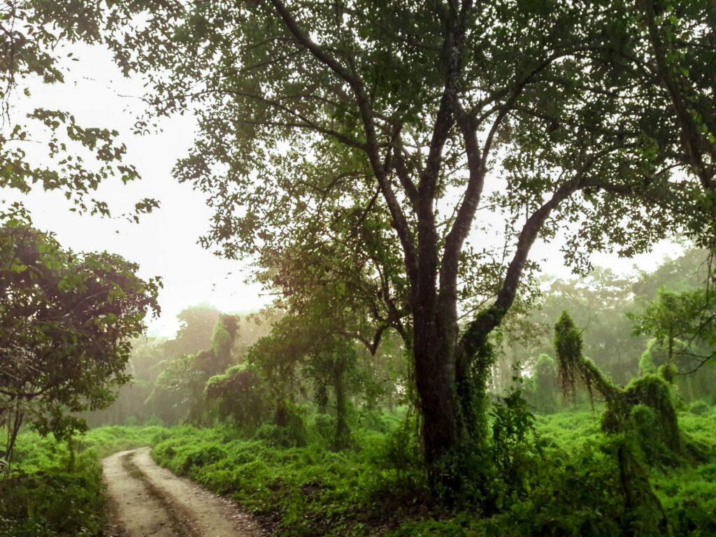 narayangadh chat